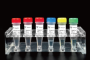 2019-Novel Coronavirus (2019-nCoV) Triplex RT-qPCR Detection Kit
